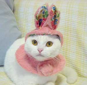 cat dressed as rabbit