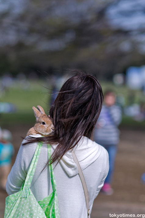 Japanese pet rabbit