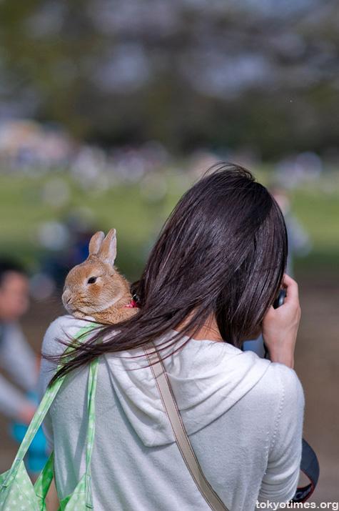 Japanese pet rabbit