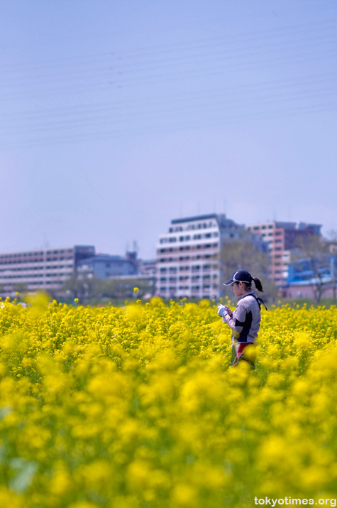 rapeseed in Tokyo
