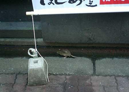 rat02.jpg