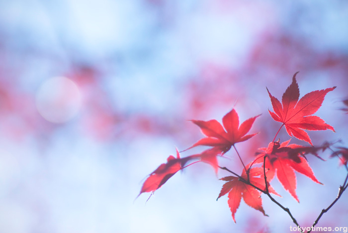 Japanese autumn colors