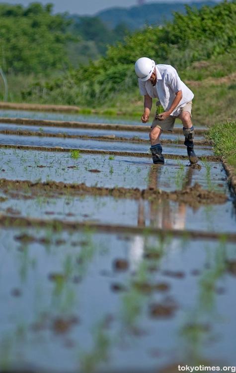 Tokyo rice fields