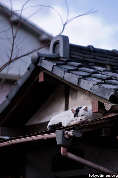 cat in Tokyo