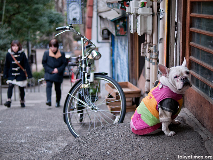 sad Japanese dog