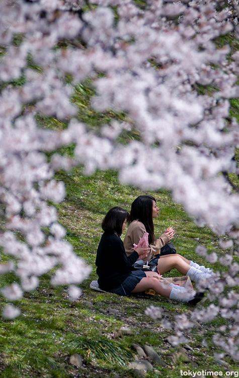 Japanese schoolgirls and sakura