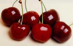 sato nishiki cherries