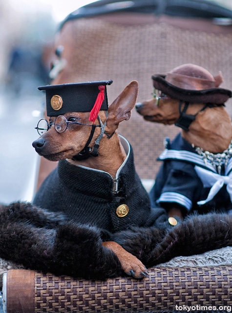 Japanese dogs in school uniforms