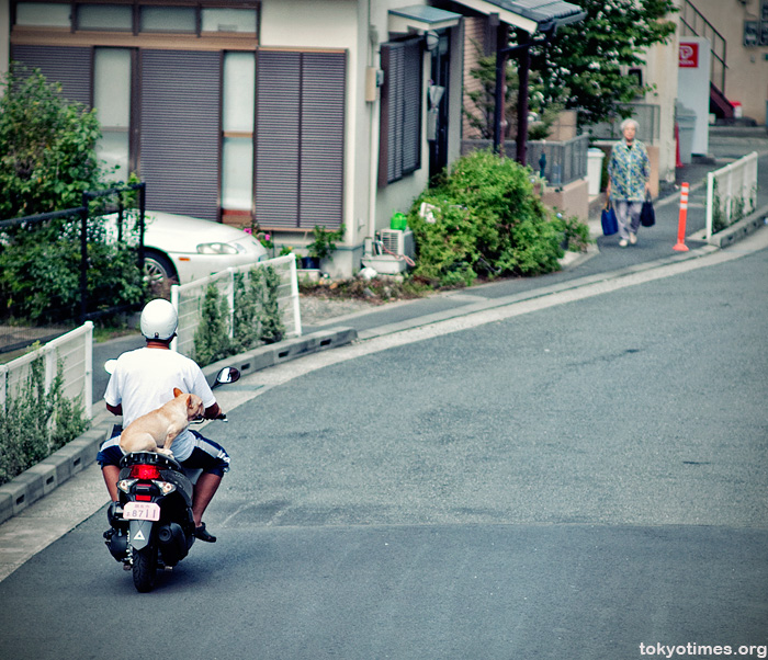 a dog on a scooter in Japan