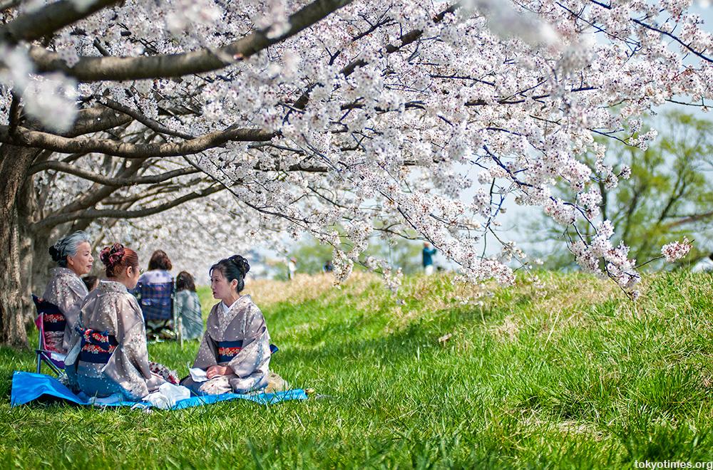spring kimono and cherry blossoms
