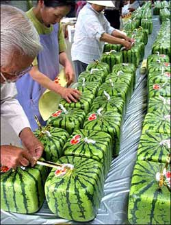 squarewatermelon.jpg