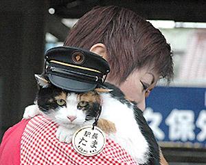 stationmaster cat