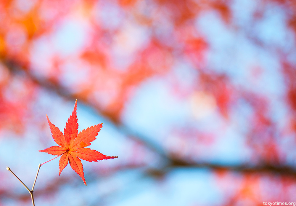 Tokyo autumn colours
