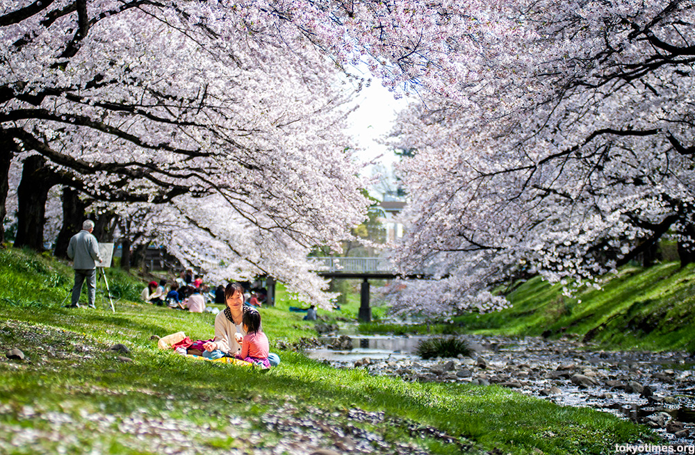 Japanese cherry blossom couple