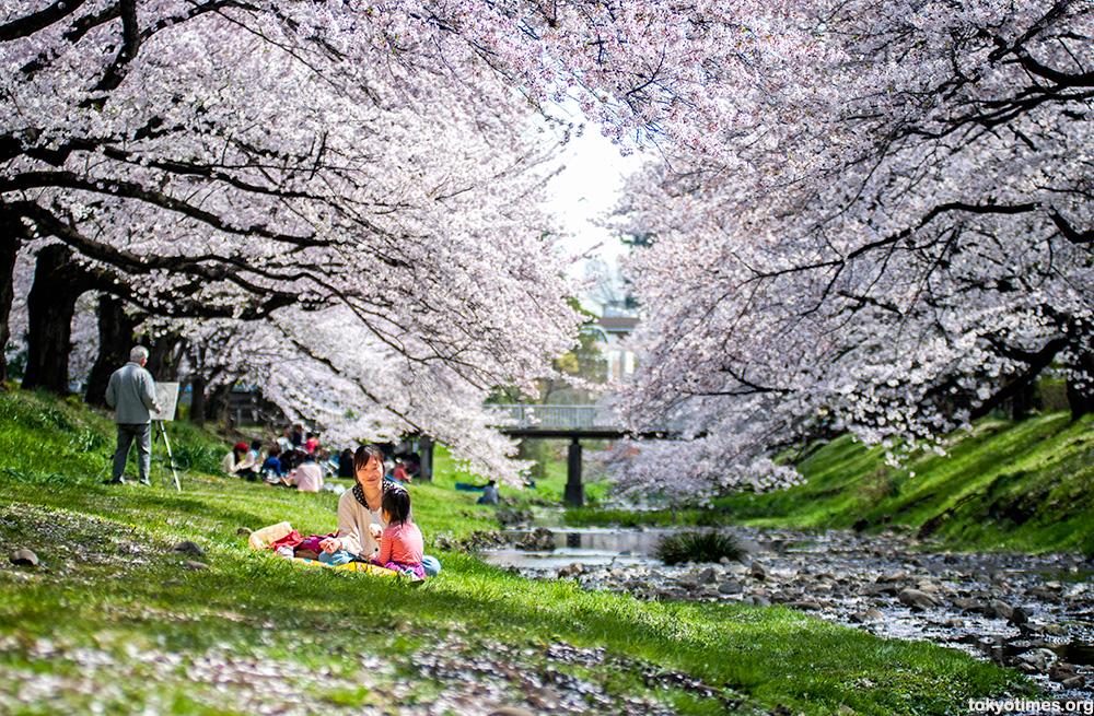 Japanese cherry blossom couple