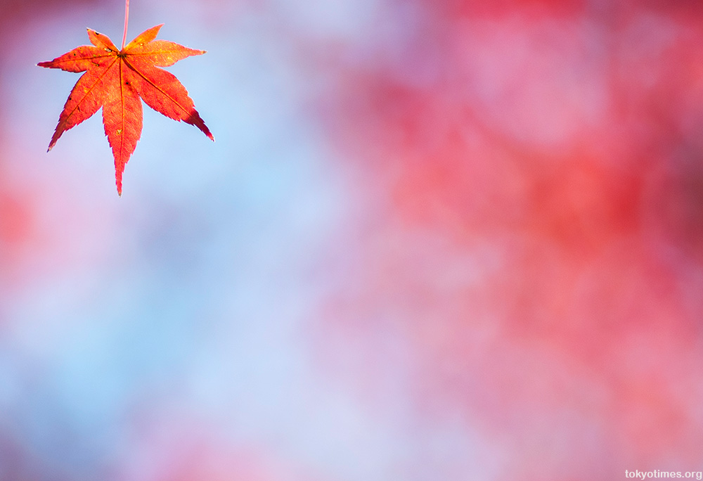Tokyo fall colors