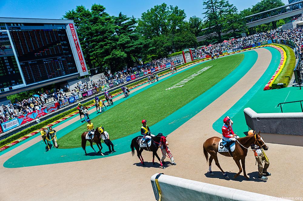 Japanese horse racing in Tokyo