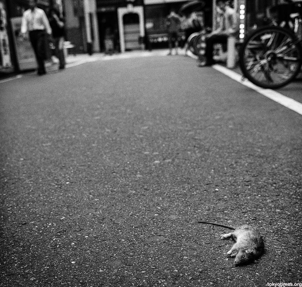 Tokyo rat