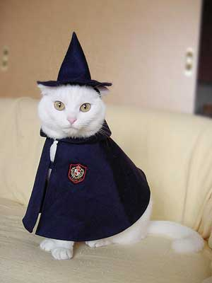 cat dressed as wizard