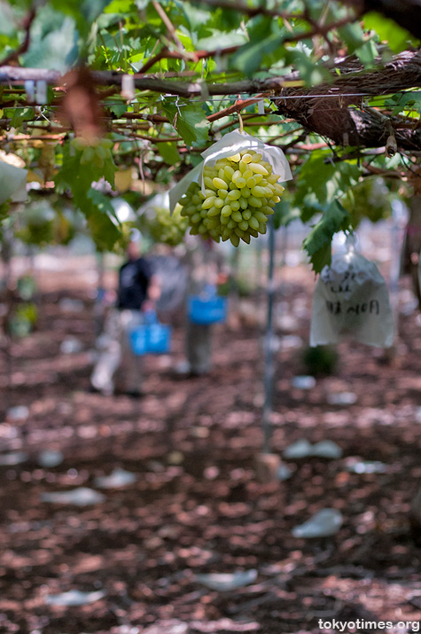 Yamanashi grapes and wine