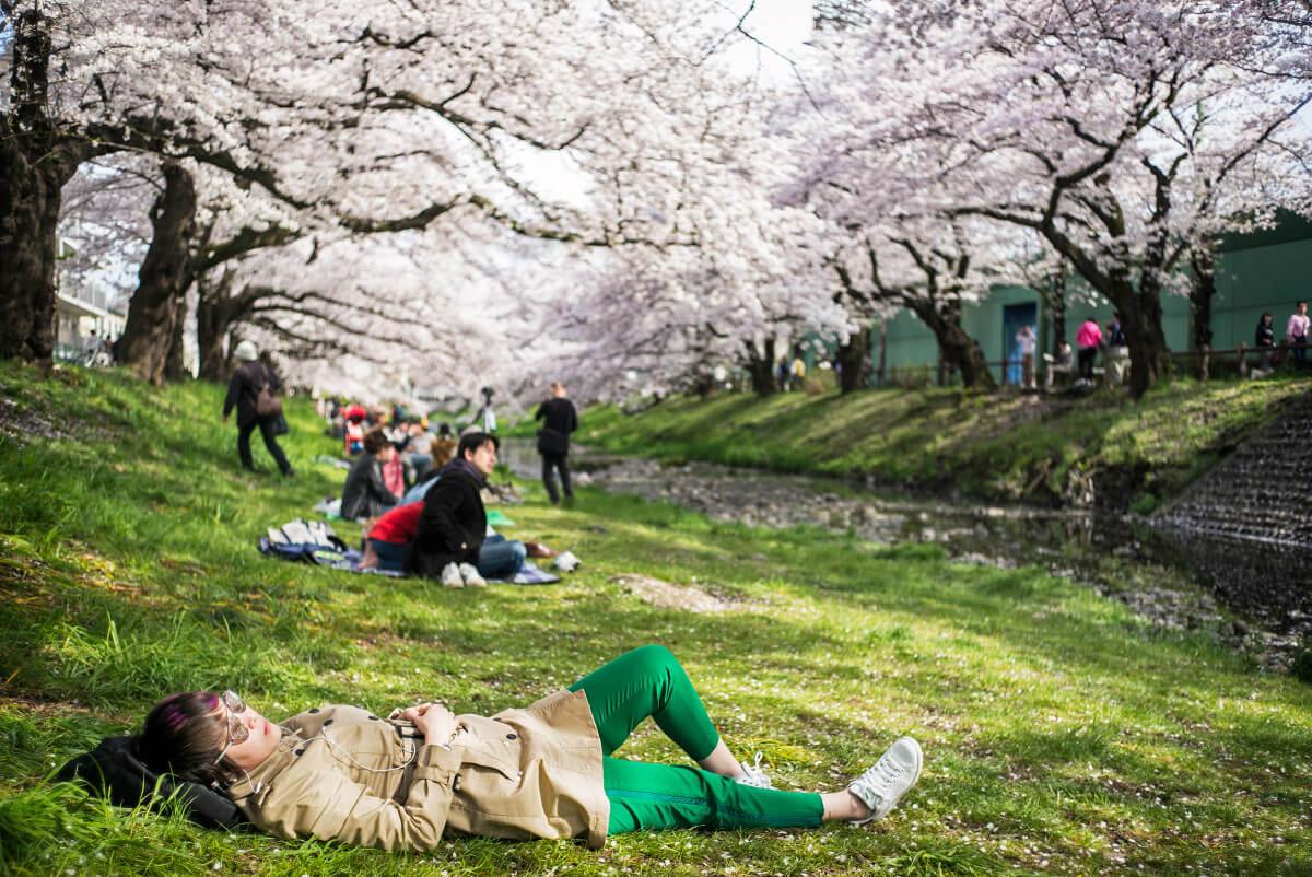 Tokyo cherry blossom beauty