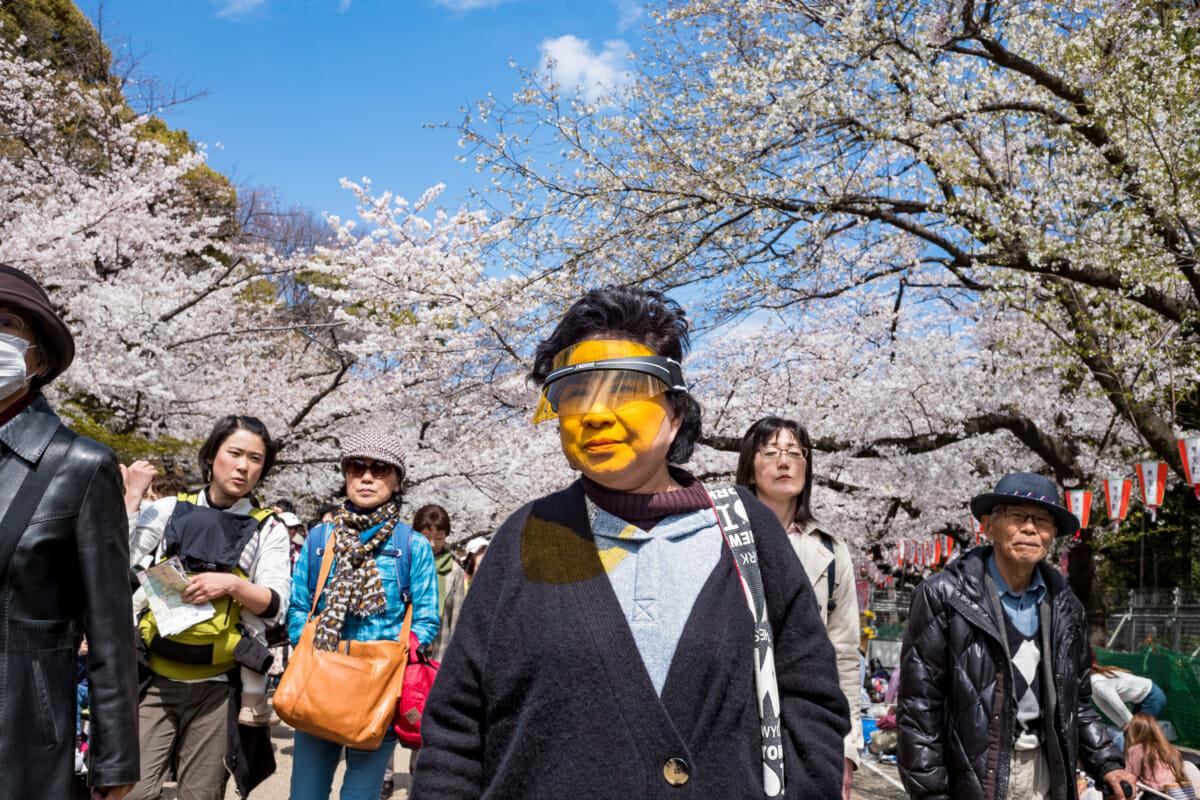 Tokyo cherry blossom through a yellow visor