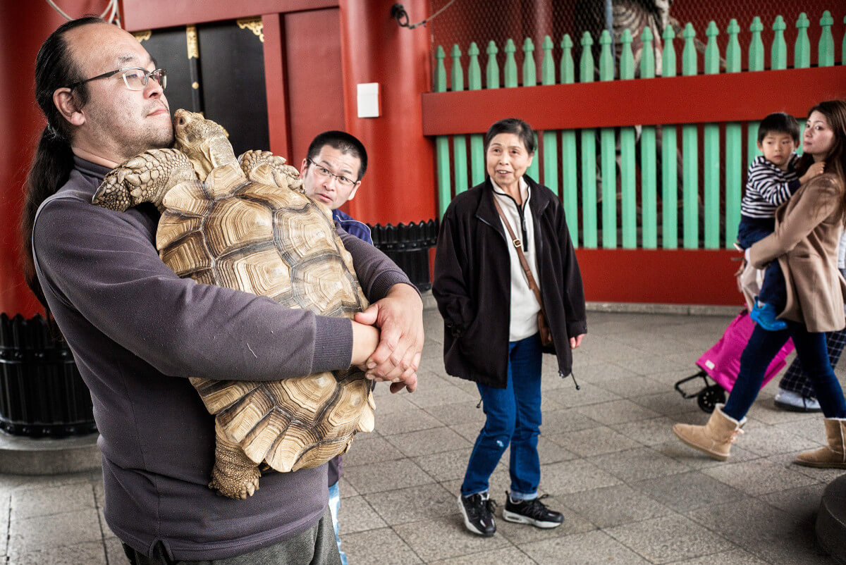 giant tortoise in Tokyo