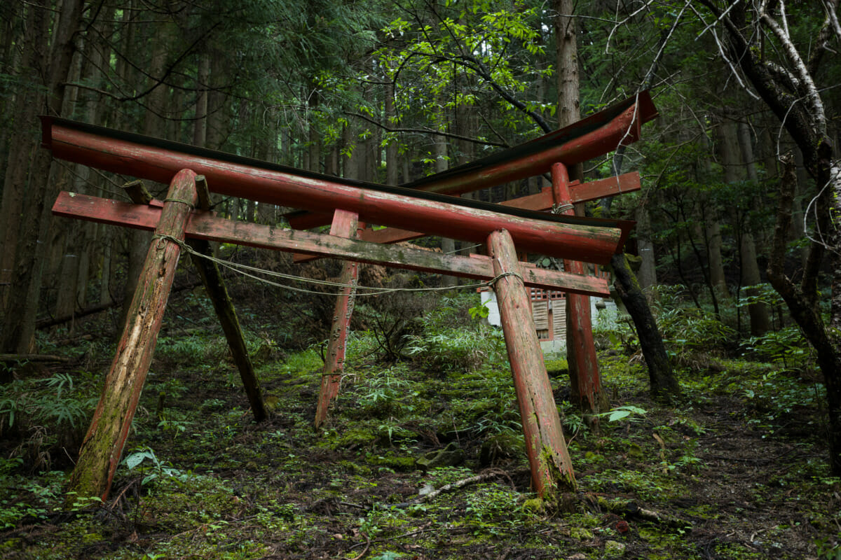decaying Japanse torii gates