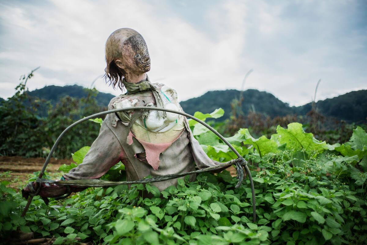 Japanse horror on the farm