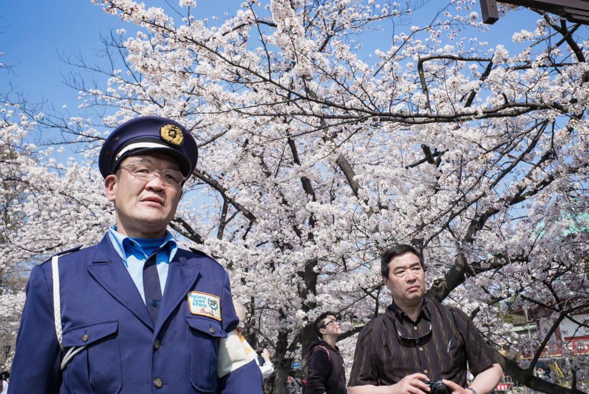 tokyo cherry blossom faces
