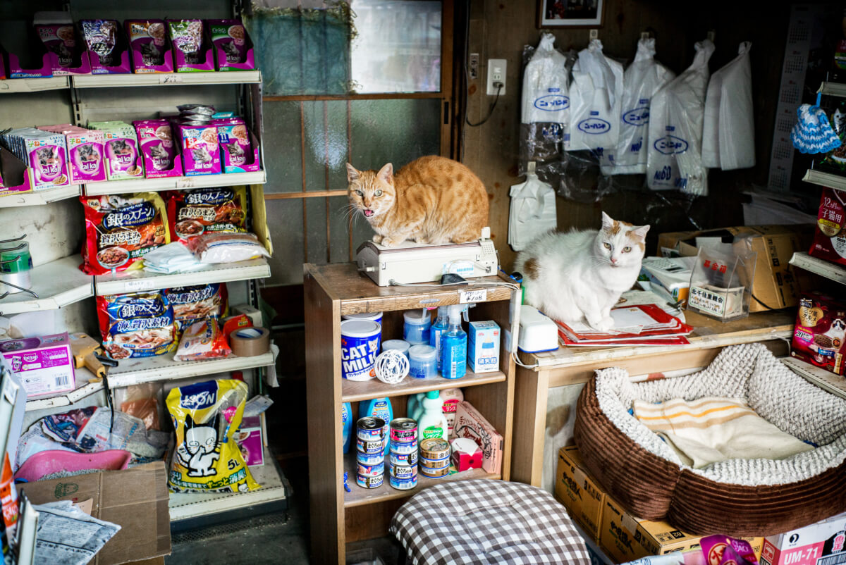 tokyo cat shopkeepers